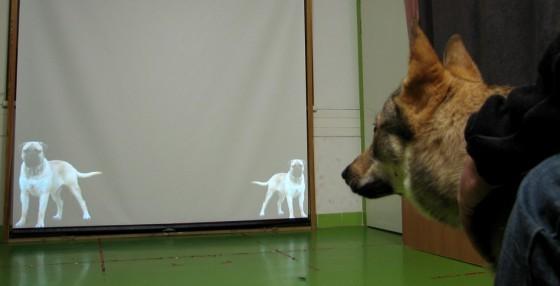 狗吠可以透漏體型細節。