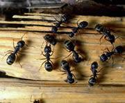 ants_180