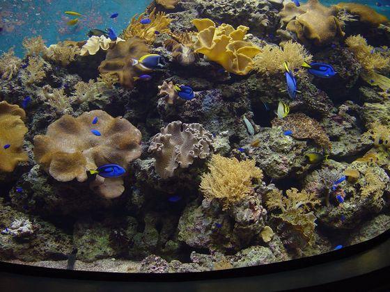 水族型態的博物館的展示乃是以生態系展示為主