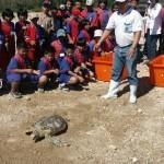 邀請學童一起野放海龜,推廣保育教育