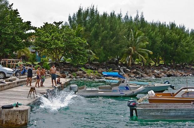 太平洋島嶼試驗養耕共生