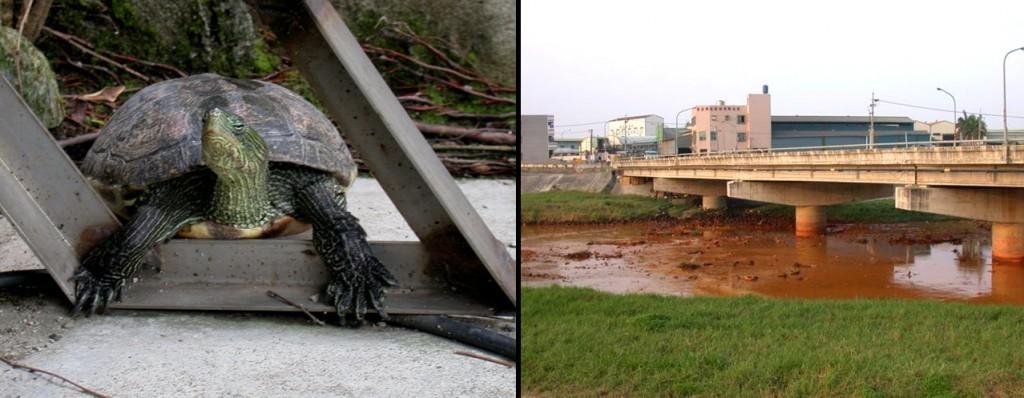 邱老師準備到台北唸大學的時候,決定將飼養的烏龜帶到野外放生,卻發現附近的溪流已經受到汙染