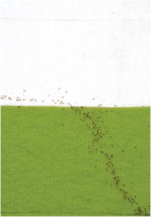 螞蟻在不同介面,所走的路徑並非直線,而是最短時間的路徑