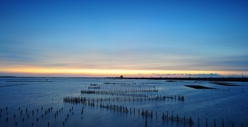 海洋酸化危機 人類難逃一劫