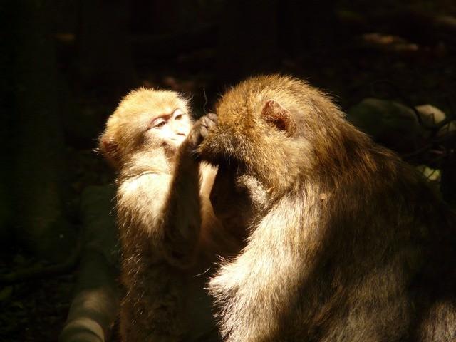 monkey-mountain-3367_640