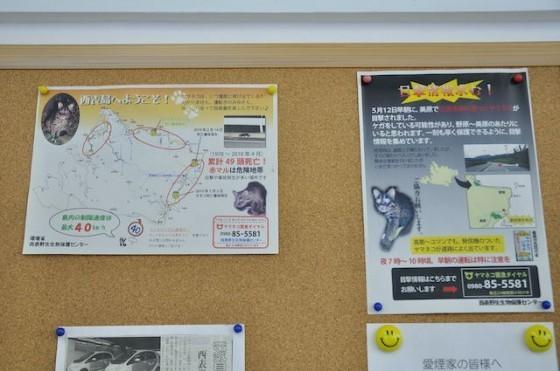 2. 租車公司布告欄,西表山貓遭到RK的訊息也站了大半的版面。