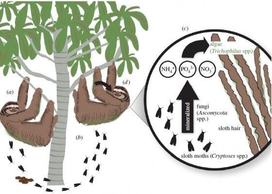 為什麼樹懶爬下樹便便