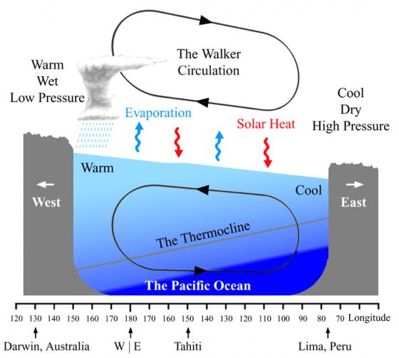 反聖嬰現象時的沃克環流,東南信風會將東太平洋溫暖的海水帶向西太平洋,赤道西太平洋就出現溫暖潮濕的低壓區,造成熱帶氣旋及雷暴等天氣現象。(圖片來源:Wikipedia, Jeffreyjhang)