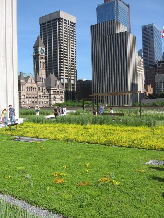 加拿大多倫多市中心的綠屋頂。增加市區綠覆率、透水鋪面等方式能減緩熱島效應的影響。(圖片來源:flickr用戶Padraic)