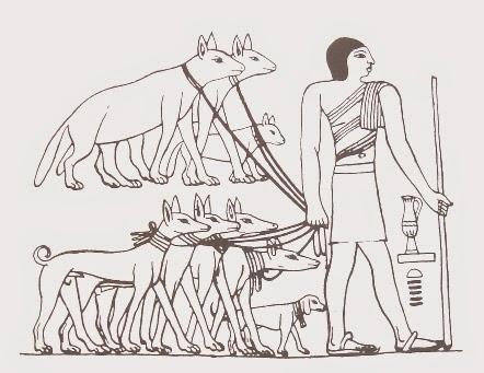 狗把人類當朋友,還是當「領頭犬」呢?圖為埃及人養的狗Tesem。 圖片來源:維基百科
