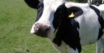 為什麼不同國家、不同廠牌的牛奶喝起來都不一樣呢?