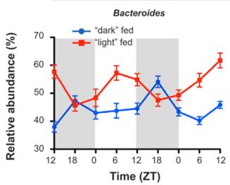 圖三、腸胃道微生物的菌相受到宿主的飲食節律的影響 左圖是Bacteroides (屬於腸道微生物)在不同時間的多寡變化。ZT (zeitgeber time)是由實驗室所訂的環境時間: ZT 0 是燈亮的時間點 (light phase); ZT12 是燈熄的時間點 (dark phase)。小鼠是夜行性動物,因此藍色是活動期間進食而紅色則是休息時間進食的腸胃道微生物變化。 [5]