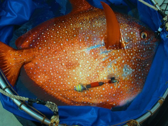 Source:NOAA Fisheries West Coast