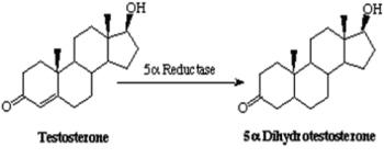 睪固酮會經五甲基還原酵素的作用而形成二氫睪固酮。