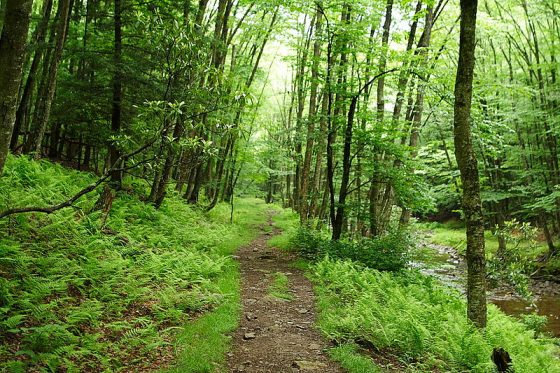 photo cedit:forestwander