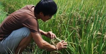 農田裡的科學家(下):「固執」是科學家和農夫的共通點