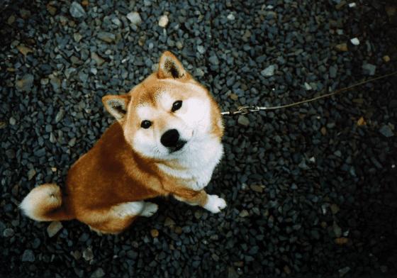 Credit: Y0$HlMl via Flickr