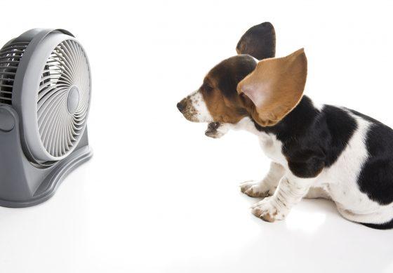 Dog-Fan