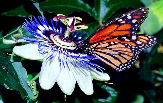 source:Swallowtail Garden Seeds