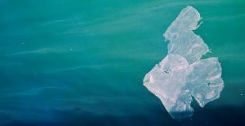 別讓悲劇再次發生!-抹香鯨擱淺事件及海洋垃圾調查