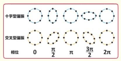 環形排列的測試質量受不同偏振方向之重力波下的影響。 (Wm. Robert Johnston)