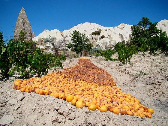 640px-Apricots_Drying_In_Cappadocia