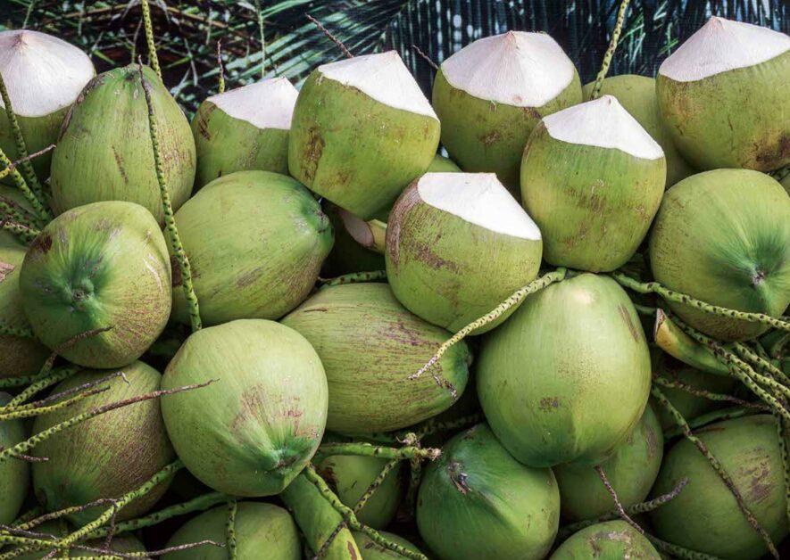 """您一定已经吃过""""月光头""""!关于椰子的两三件事-""""吃坚果的知识""""-PanSci"""