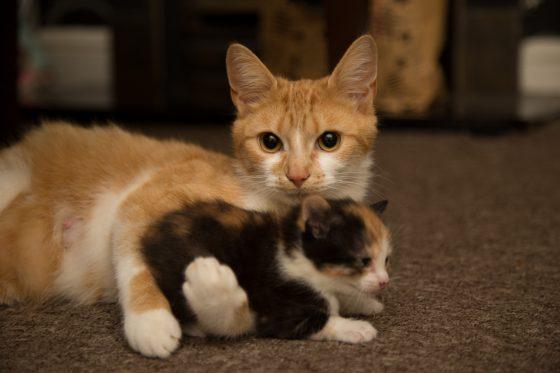 beautiful-cat-1463991570QOM