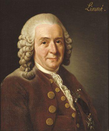 745px-Carl_von_Linné