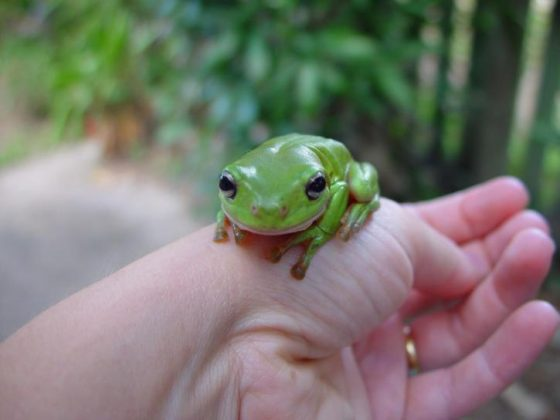green-frog-in-hand-725x544
