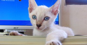 防貓咪敲鍵盤軟體—《搞笑諾貝爾獎》