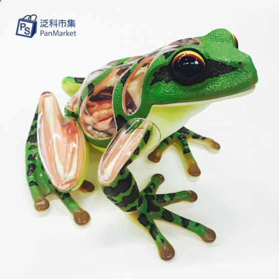 4D蛙-05