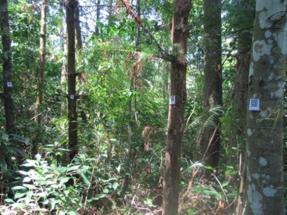 利用森林資源調查的資料製作QRcode解說牌,為日後追蹤樹木生長紀錄建立資料庫。圖/作者提供。