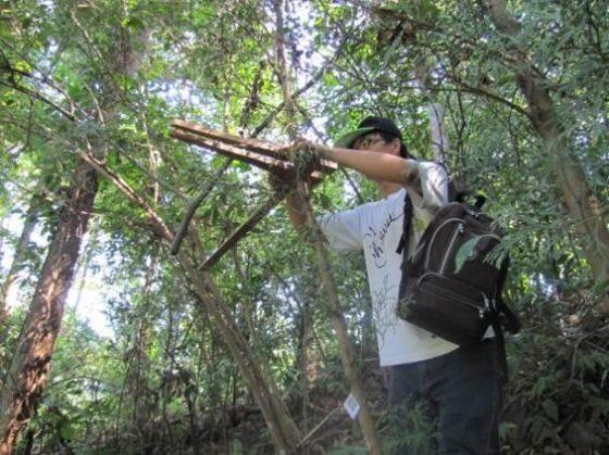 實際到實習林場進行樹木胸高直徑生長調查。圖/作者提供