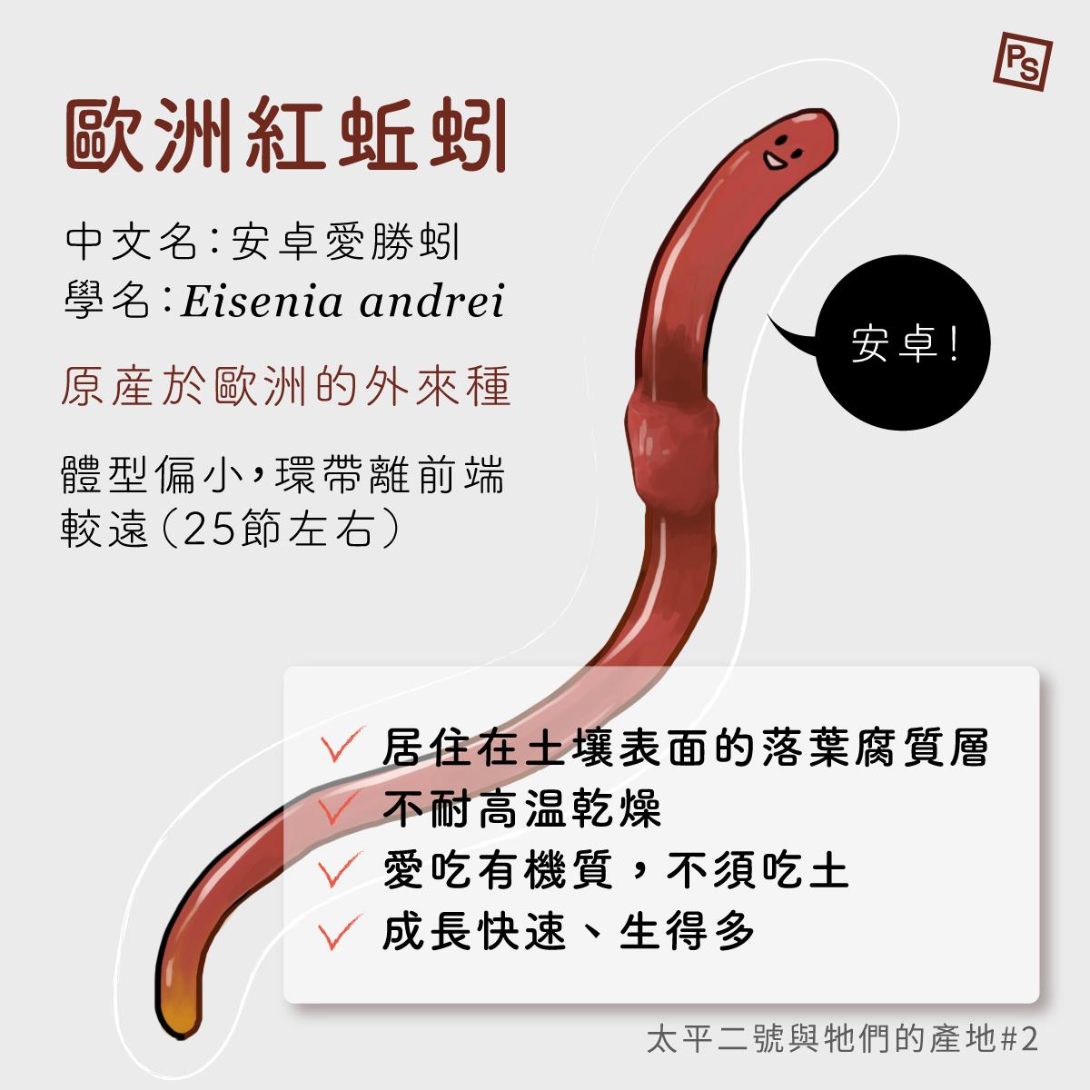 歐洲紅蚯蚓