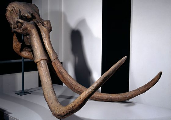 steppe-mammoth-skull-news