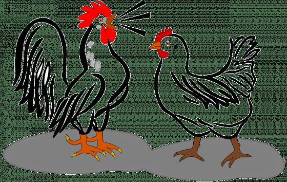 雞的溝通方式,遠比我們想的還多。圖/Pixabay
