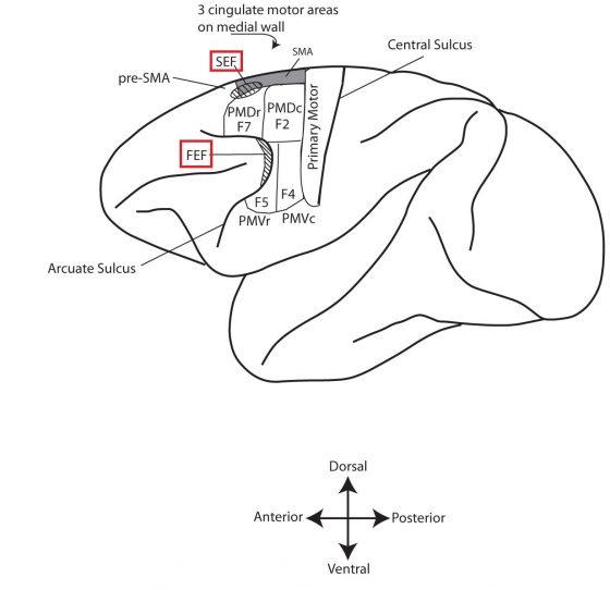 motor_cortex_monkey