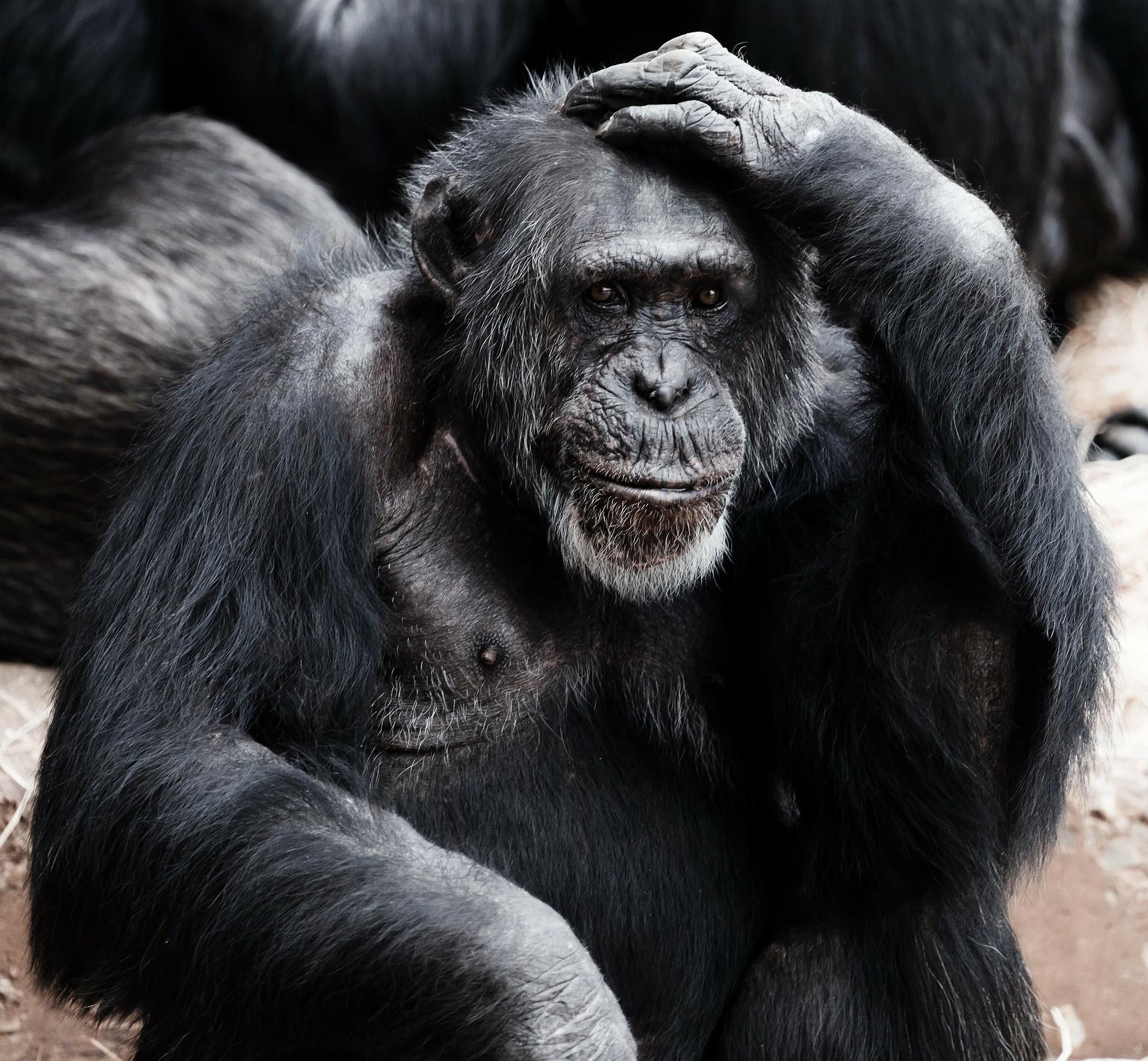 動物有意識嗎?該如何知道?——《誰是我?意識的哲學與科學》