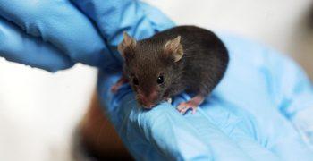 泛知識節紀實:你不知道的實驗動物