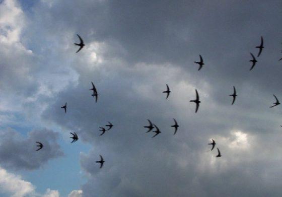 飛得越快,樓燕的世界則慢──《變身野獸》