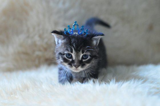養貓不需要理由:萌貓何以征服人類的心?--《我們為何成為貓奴?》