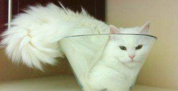 貓體力學!喵星人的固液態之謎——2017搞笑諾貝爾物理學獎