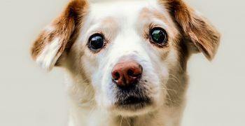 你有沒有在看牠,會影響狗狗的臉部表情?