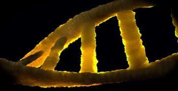 發現神經細胞 DNA 修復調節機制,精神疾病治療新曙光?