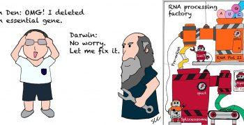 關上基因的一扇窗,演化開啟另一道門:酵母菌研究揭露絕處逢生的演化奧秘