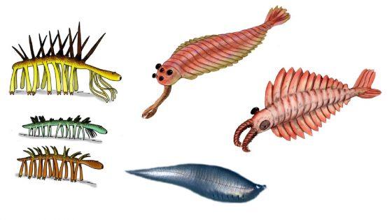 怪誕蟲、歐巴賓海蠍、奇蝦以及後斯普里格蟲。