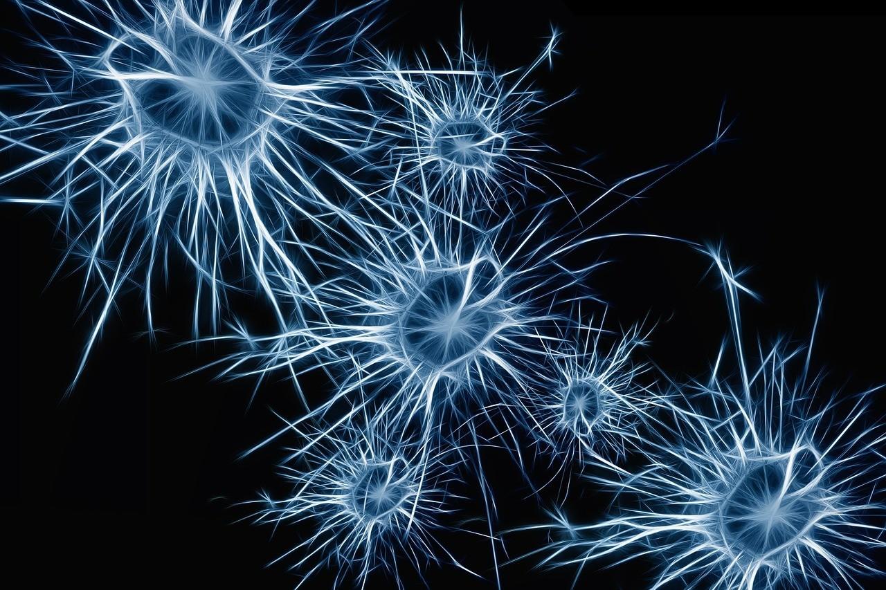 尚未解開的大腦羅生門:腦神經到底能不能再生呢? - PanSci 泛科學