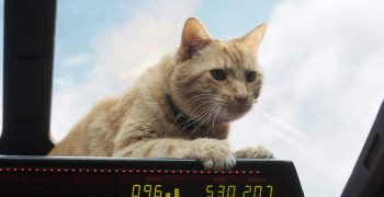 《驚奇隊長》裡的貓貓英雄:那些關於「呆頭鵝(Goose)」的科學小秘密!