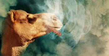 【特輯】菸煙相報何時了:人類與菸品的愛恨情仇